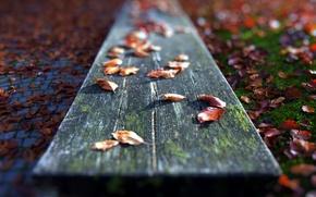 Картинка листья, макро, скамья