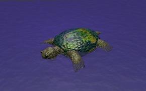 Картинка вода, земля, черепаха, юмор