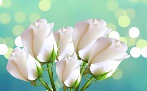 Картинка розы, букет, лепестки, блик