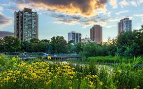 Картинка небо, трава, облака, деревья, пейзаж, закат, цветы, город, пруд, парк, небоскребы, вечер, желтые, Чикаго, USA, ...