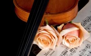 Картинка ноты, музыка, скрипка, розы, красота