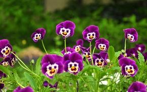 Картинка трава, мордочки, сиреневые цветочки