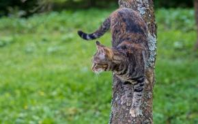 Обои дерево, взгляд, фон, кот