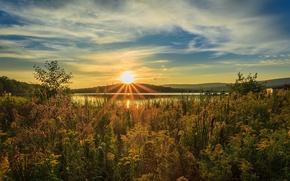 Картинка солнце, лучи, свет, река, камыш