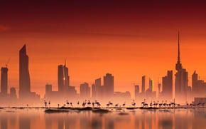 Картинка city, sky, photography, sea, landscape, sunset, water, skyscraper, birds, architecture, building, urban, cityscape, flamingos, Kuwait ...