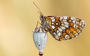 Картинка глаза, бабочка, крыло, кнопка, усики, butterfly, button, eye, wing, antennae