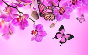 Картинка цветы, flowers, butterflies, orchid, blossom, pink, бабочки, орхидея, beautiful