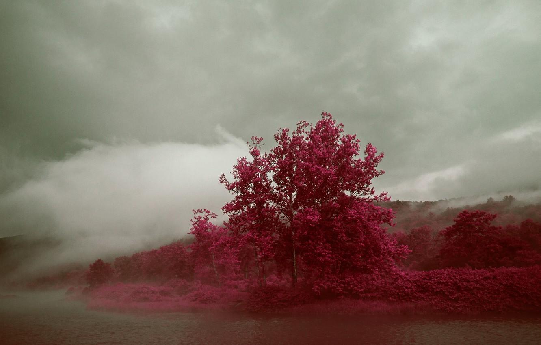 Фото обои осень, небо, деревья, тучи, туман, озеро