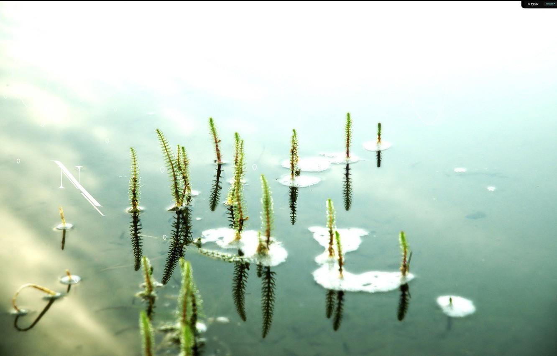 Фото обои вода, пруд, одиночество, настроение, лилии