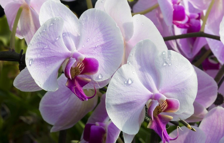 Орхидея цвет картинки