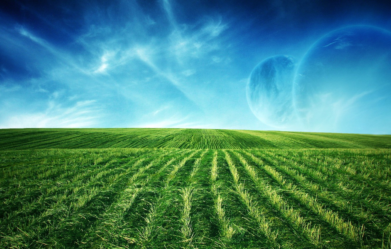 Фото обои зелень, поле, луны