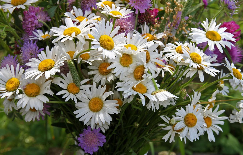 Картинки полевые цветы ирис лаборатории