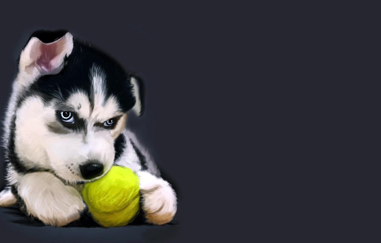 Скачать рисунок собаки хаски