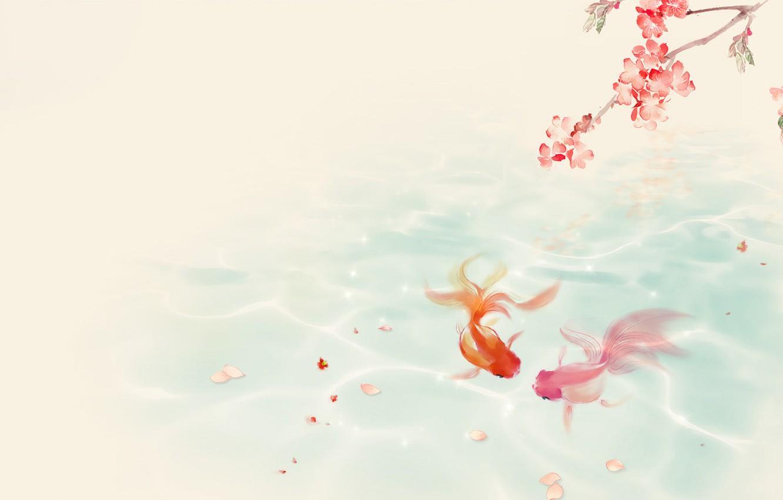 Фото обои вода, пруд, настроение, ветка, сакура, золотые рыбки