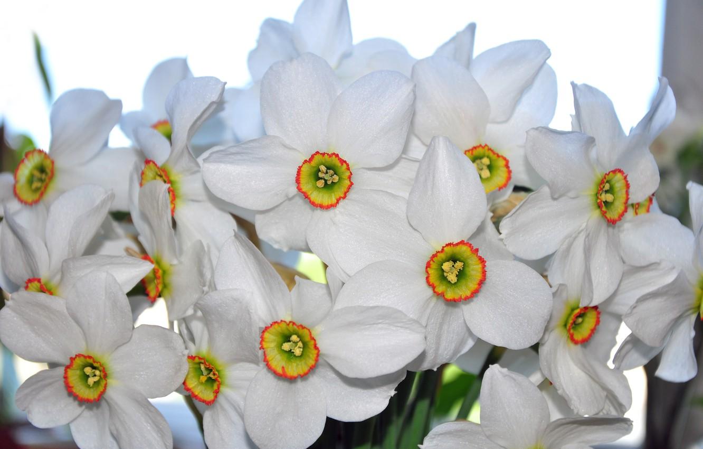 картинки цветы красивые нарциссы мария справилась
