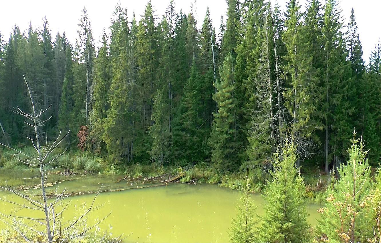 Тайга болота картинки