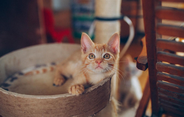 Фото обои малыш, рыжий, котёнок, рыжий котёнок