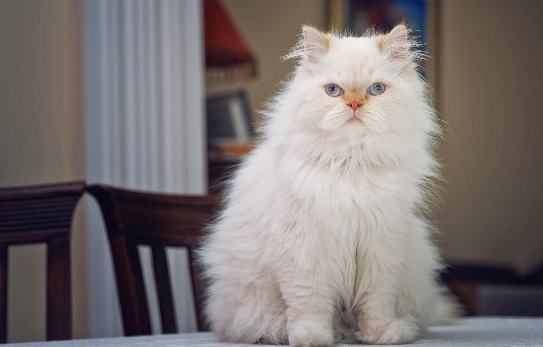 дрожжи картинки самые пушистые кошки стала моделью