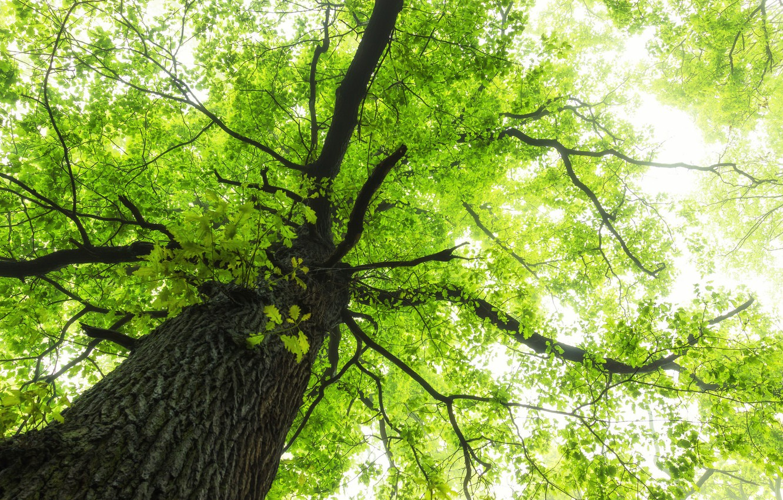 картинки зеленое дерево цветут довольно