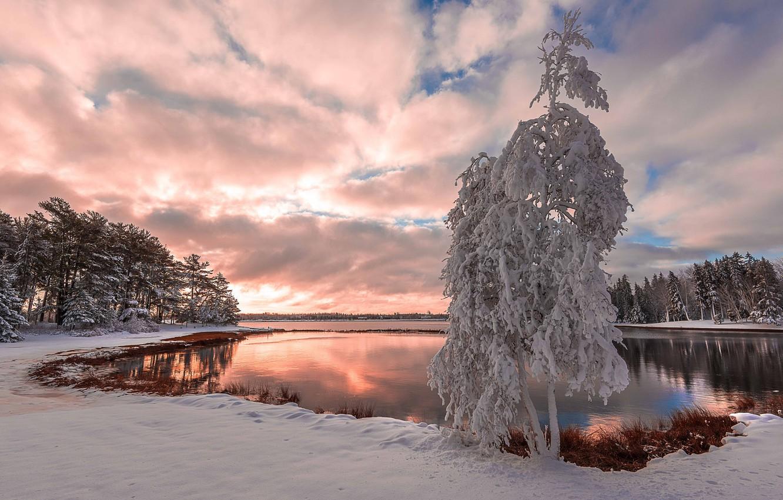 Кабачковая икра рецепт с фото на зиму места