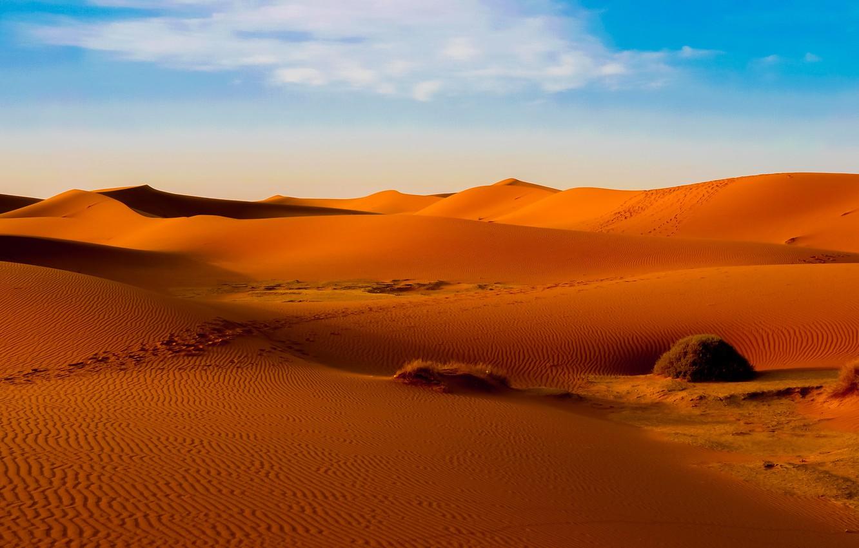 ребрышки друг картинки пустыня для рабочего стола лучший