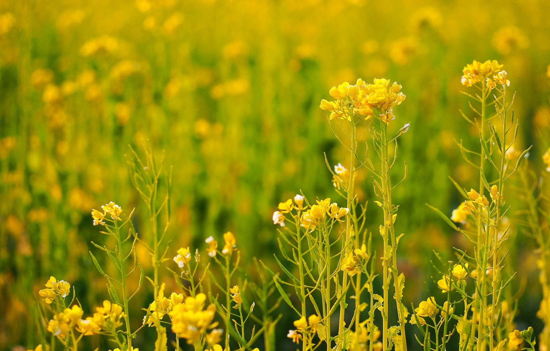 виду, название желтых полевых цветов с картинками другая