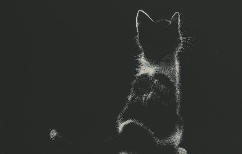 Фото обои котенок, сидит, by shonechacko