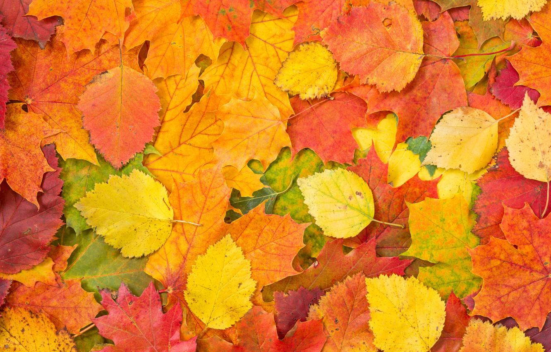 Фото обои фон, autumn, leaves, осенние листья