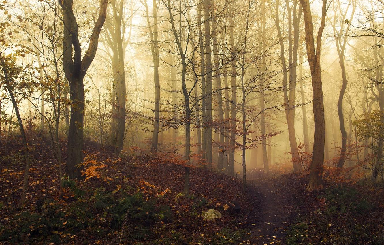 Фото обои осень, лес, листья, свет, деревья, туман, загадка, light, forest, road, тропинка, trees, nature, leaves, fog, …