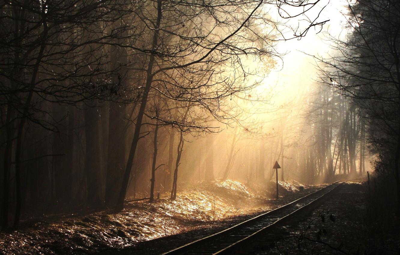охмурила картинки темный фон лес железная дорога территории