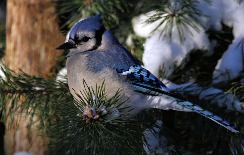 Днем рождения, картинки животные и птицы зимой