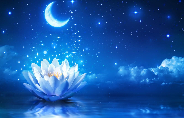 Фото обои цветок, вода, сияние, лотос, flower, water, sparkle, bloom, water lily