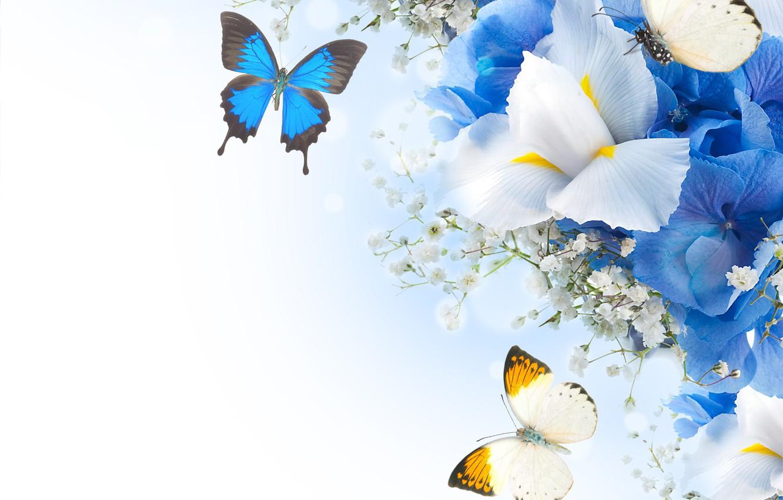Фото обои бабочки, цветы, гортензия