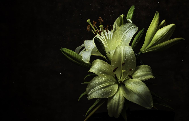 Фото обои капли, макро, ночь, роса, лилия, Flower, Rain, Yellow, Зимбабве, Macro, Lilium, Dew, Zimbabwe, Harare, Wayne …