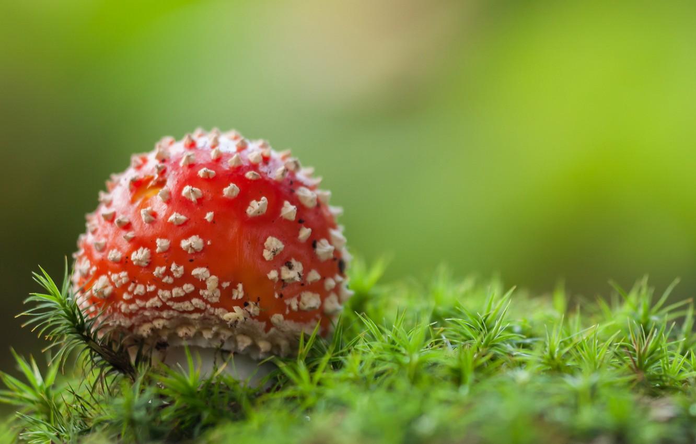 картинка яркого грибами они продолжат работать
