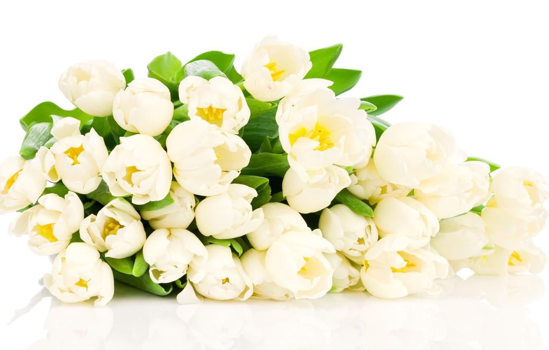 Фото обои цветы, тюльпаны, белые тюльпаны
