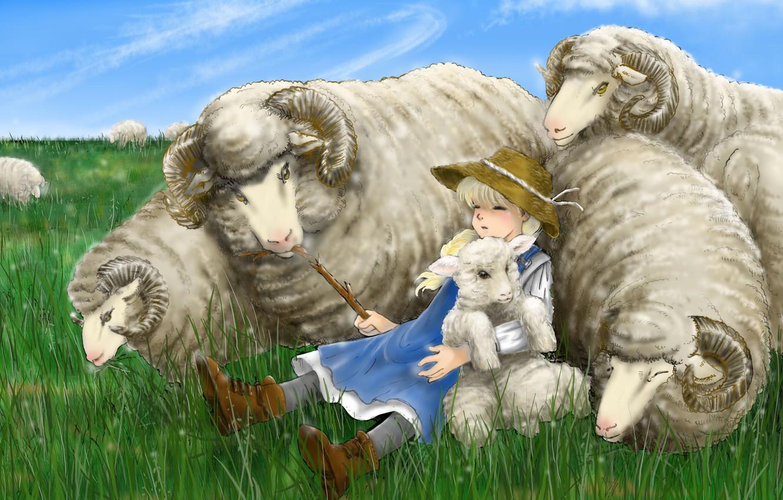 как окно пастушка и овечка картинки побережье марбелья