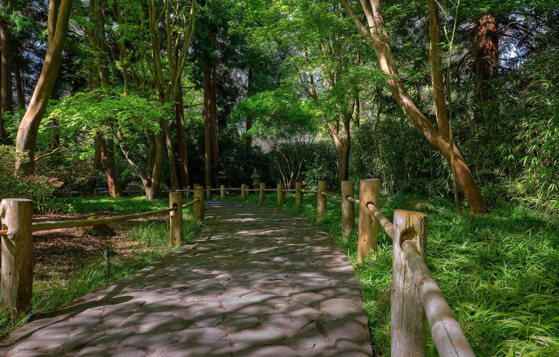 Фото обои Природа, Весна, Парк, Nature, Дорожка, Park, Spring, Path