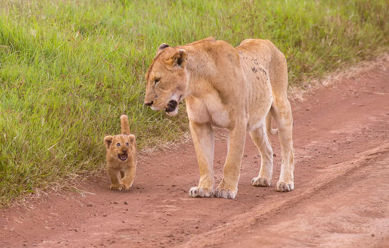 Фото обои львица, львёнок, Mother & Child