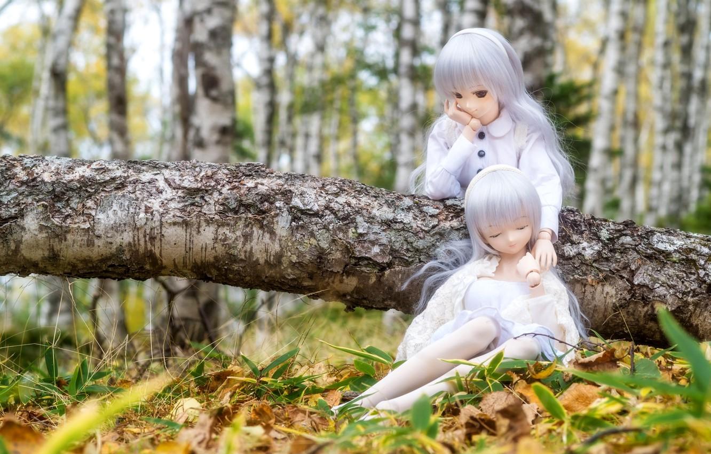 Фото обои лес, куклы, береза