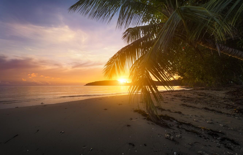 так, справедливости берег океана с пальмами фото выбор
