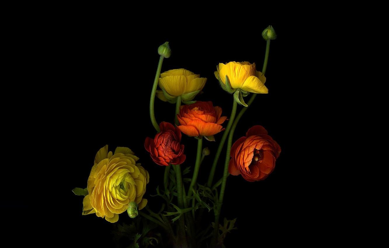 Фото обои свет, фон, куст, тень, лепестки, стебель, бутон