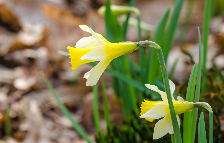 Фото обои цветок, листья, весна
