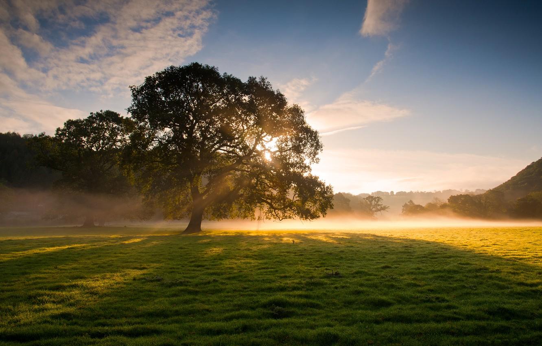 Фото обои трава, солнце, лучи, свет, природа, туман, роса, дерево