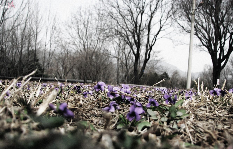 Фото обои цветы, природа, макросьемка