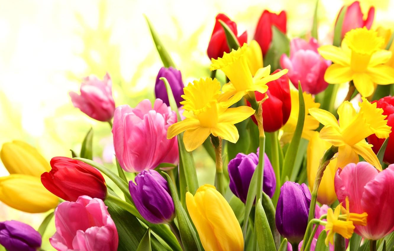 Фото обои букет, лепестки, тюльпаны