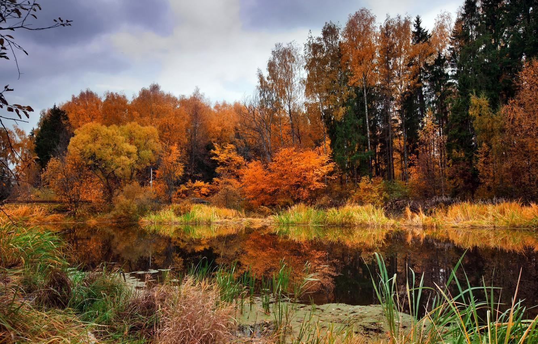 первым фото природа осеннего леса подходящего аппарата для