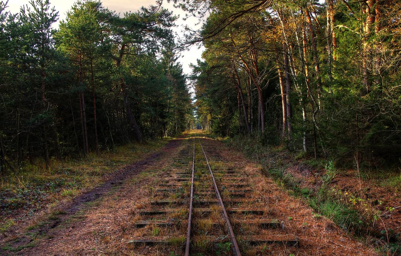Фото обои лес, деревья, железная дорога, заброшенность