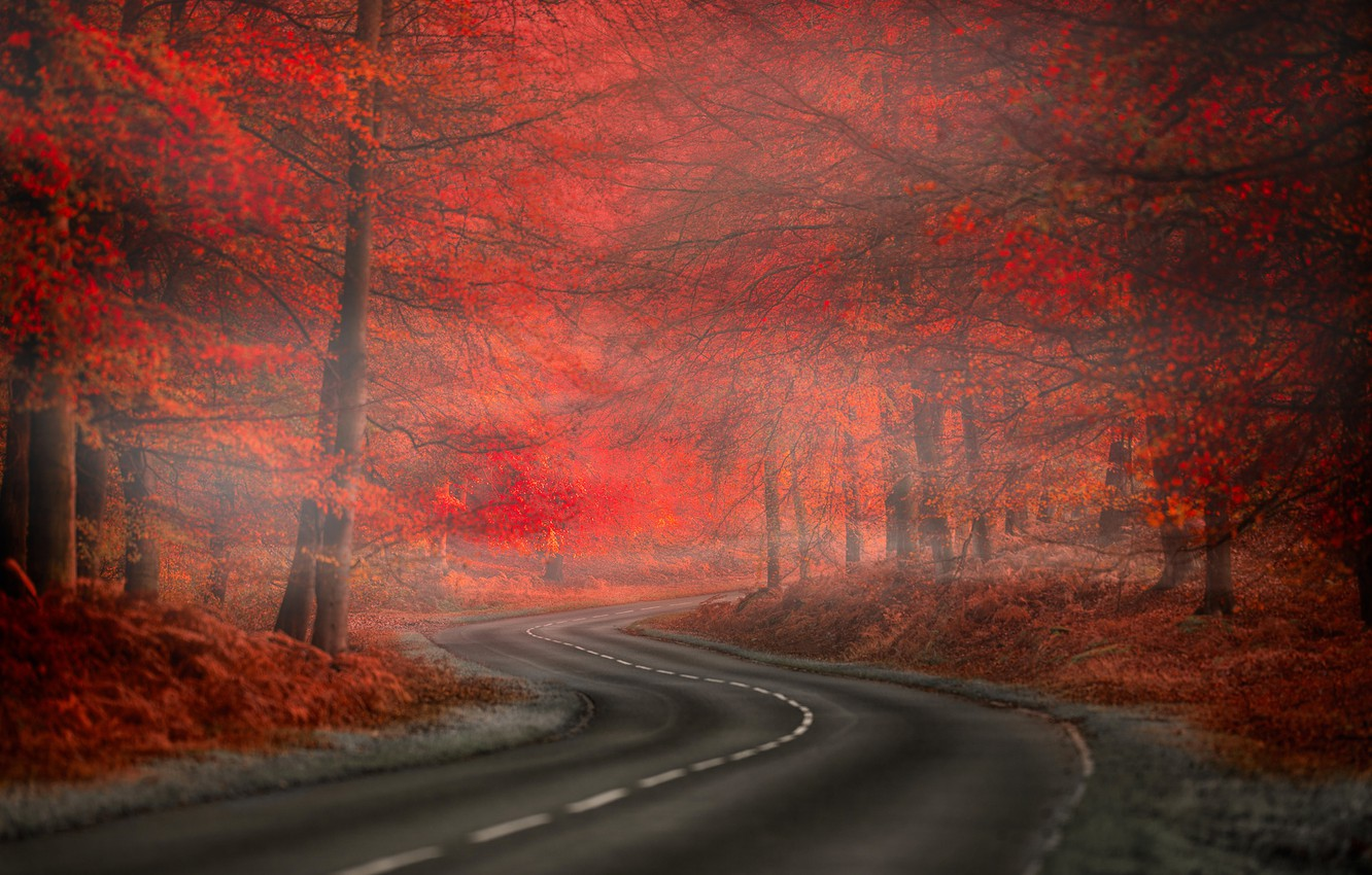 Фото обои Red, Road, Fog, Forest, Leaves, Nature. Beauty