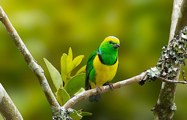 Фото обои птица, цвет, ветка, перья, клюв